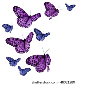 colorful butterflies on white background, all with clipping paths