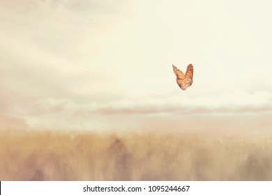 colorful butterfly flying free in the middle of nature