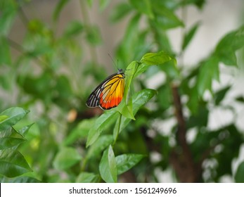 The colorful butterfly is holding on the tree
