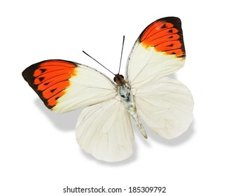 Colorful butterfly , isolated on white