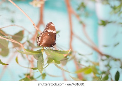 Colorful Butterfly in nature