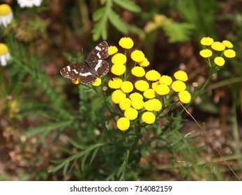 Colorful butterfly on a bright yellow flower. Beautiful illustration of nature and good ecology.