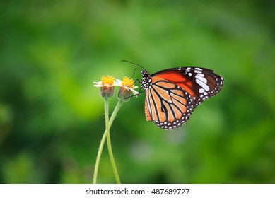 colorful butterfly on green background