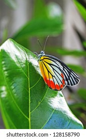 Colorful Butterfly on green leaf Close-up