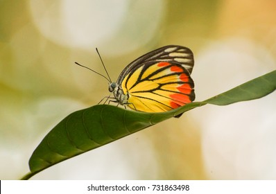 Colorful butterfly on green leaf