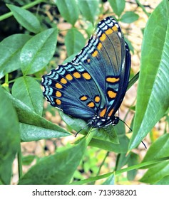Colorful Butterfly on Green Leaves