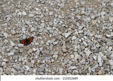 colorful butterfly on a grey stone path