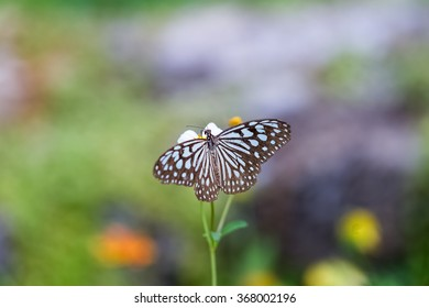 colorful butterfly on little white flower