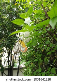 Colorful butterfly on tree with white flowers and garden background.