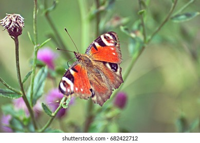 colorful butterfly on a violet flower on a field in summer
