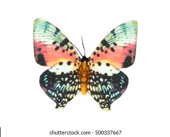 colorful butterfly on white background