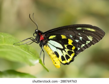 Colorful butterfly resting on a leaf.
