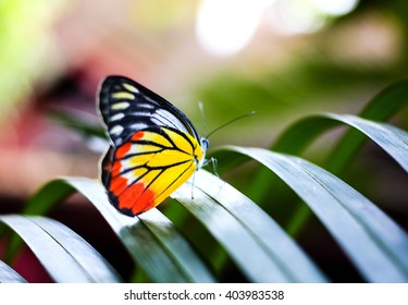 Colorful butterfly resting on the palm tree leaf in Thailand.