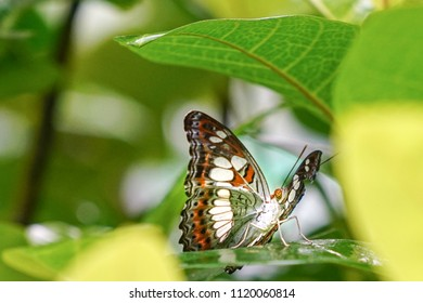 Colorful butterfly resting under a leaf