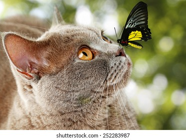 Colorful butterfly sitting on cat's nose on green natural background