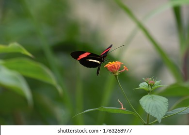 Colorful butterfly, wildlife of Costa Rica