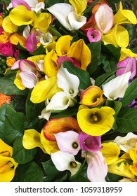 Colorful calla lilies