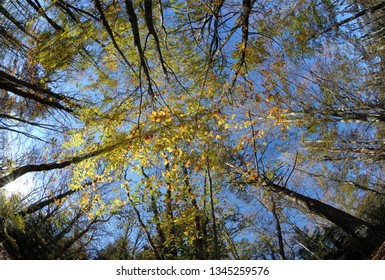 Colorful canopy fall trees on blue sky background