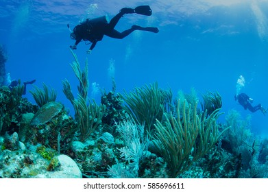 colorful caribbean reef with scuba divers in the background in deep blue crystal clear water.
