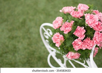 Colorful  Carnation flowers