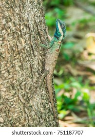 Colorful chameleon open mouth on the trees.