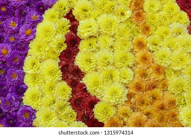 Colorful chrysanthemums flowers  background in spring or mothers day