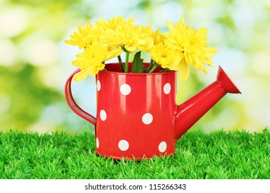 colorful chrysanthemums in red watering can with white polka dot on green background
