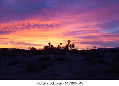 Colorful clouds at sunrise in Borrego Springs, California with palm trees