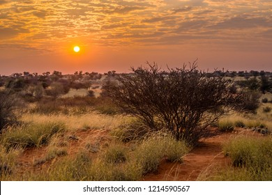 Colorful cloudy sunrise in Kalahari desert, Namibia. Rising sun over the dry bush and grass in red sand dunes.