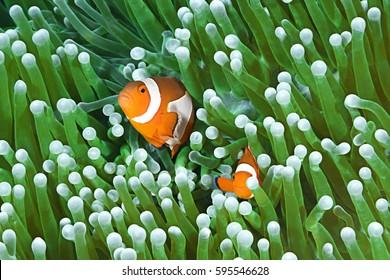 Colorful Clownfish Couple