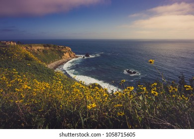 Colorful coastal view of the dramatic Pelican Cove cliffs covered with yellow wildflowers during the California Super Bloom of 2017, Rancho Palos Verdes, California