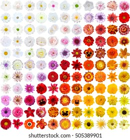Colorful collage of flowers (121 flowers)
