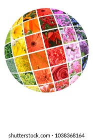 Colorful collection of annual and perennial flowers in the shape of a globe with reflection.