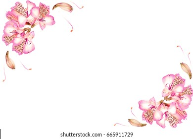 Colorful composition, composition of flowers, botany, stems, branches on white background, valentine background, flowers on isolated background