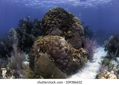 Colorful coral with blue water background and sand channels in Key Largo, Florida.