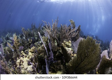 Colorful coral with blue water background in Key Largo, Florida.