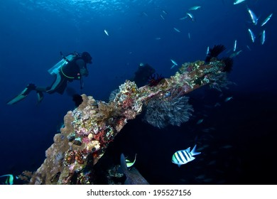 Colorful coral and diver on shipwreck marine life of Liberty.