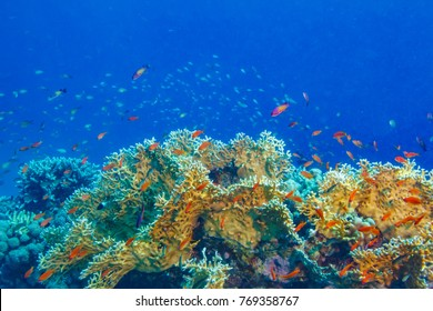 Colorful coral reef with blue aquatic copyspace