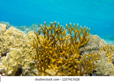 Colorful coral reef at the bottom of tropical sea, yellow fire coral, underwater landscape