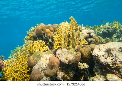 Colorful coral reef at the bottom of tropical sea, hard corals, yellow fire corals, underwater landscape