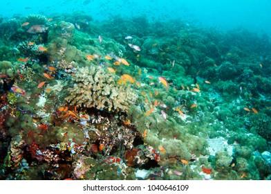 Colorful coral reef, Maldives.