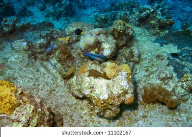colorful coral reef with parrotfish in blue caribbean water near roatan honduras