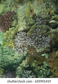 Colorful coral reef with various of marine life