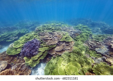 Colorful corals thriving in tropical coral reef of South Penghu Marine National Park, Taiwan