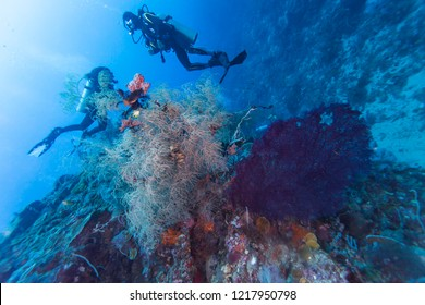 Colorful corals and tropical fishes, marine life around coral reef of Southern Leyte, the Philippines.