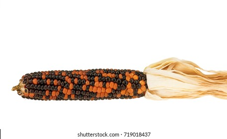 Colorful corn isolated on white background