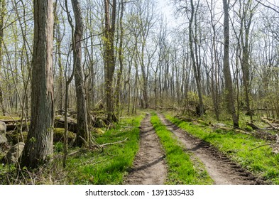 Colorful country road through a bright forest by springtime in a swedish nature reserve by Dalby at the island Oland