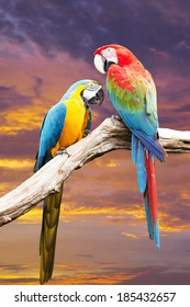 Colorful Couple Macaw  with  beautiful sky.