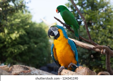 Colorful couple macaws sitting on tree