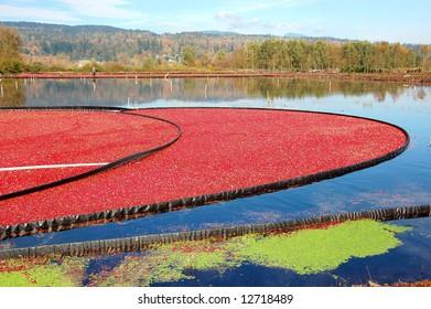Colorful Cranberry Bog